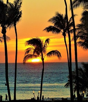 Palm trees and sunset in Hawaii