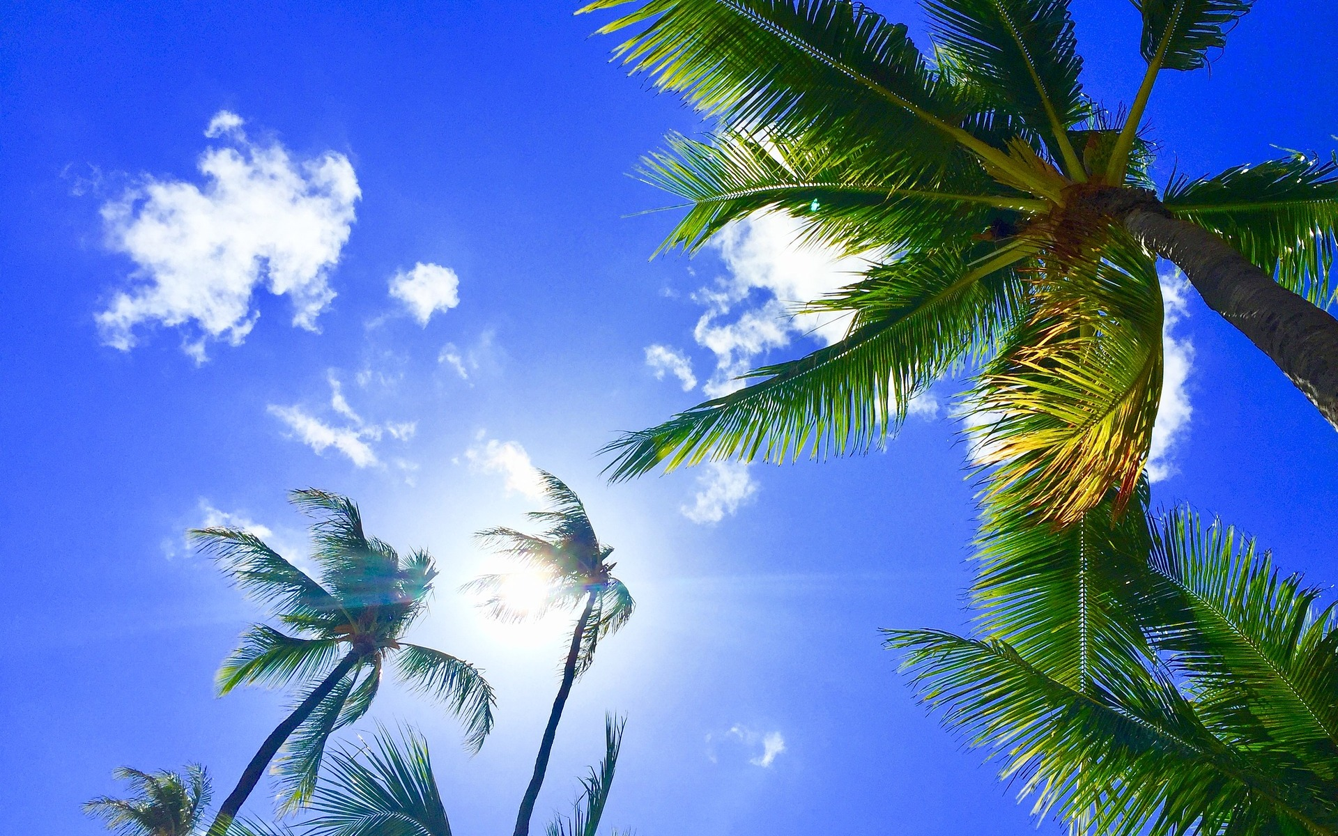 Blue sky and clouds with palm trees in Hawaii